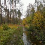 Wycieczka biegowa po lasach przy Olesnicy